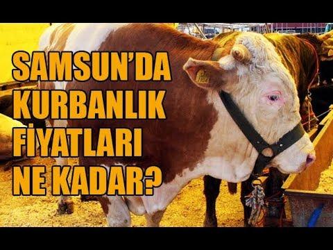 Samsun'da kurbanlık fiyatları ne kadar?