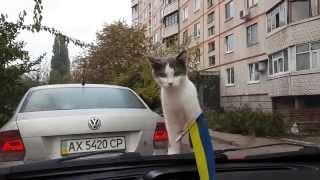 Супер прикол  смешная реакция кота