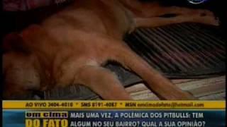 PITBULL MATA CACHORRO