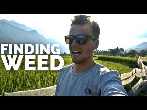 🍁HOW TO FIND WEED IN VIETNAM🍁 Travel