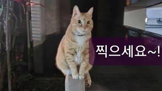 [VLOG] 인싸고양이 코코