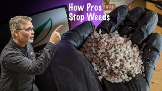 How To Get Rid of Weeds In Your Lawn This Fall // Lawn Weed Prevention