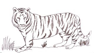 Learn to draw an easy Bengal Tiger