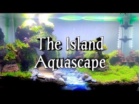 How To Make The Island Aquascape| Aquascaping Step by Step ...