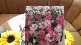 видео Вьющиеся и ампельные растения для оформления балкона