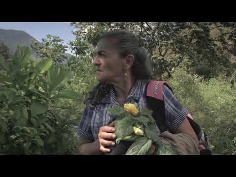 Tierra Negra - Edson Velandia (música original del documental Sembradora)