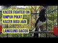 Kacer Full Fighter Gacor Dor Ampuh Pikat Kacer Manapun Nyaut Jadi Gacor Kicau Kacer Juara  Mp3 - Mp4 Download