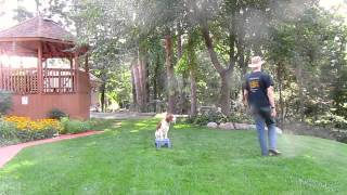 Part Of A Training Session With My 10 Month Old Puppy Lily | Follow The Leader Dog Training