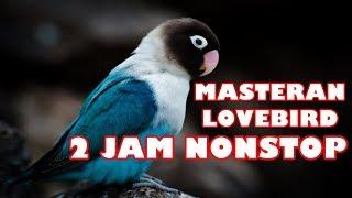 Gambar cover Master Suara Burung Lovebird Ngekek Gacor 2 Jam (Lovebird Singing)