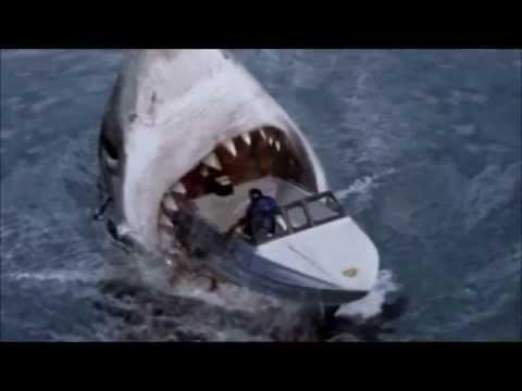 Megalodons Les Plus Gros Requins Youtube