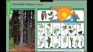 видео Растения и окружающая среда