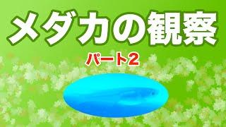 メダカの卵をいただき飼育&観察にチャレンジ! パート1の続きです♪ 今...