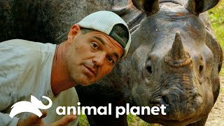 Frank se salva de una embestida de rinoceronte  |  Wild Frank en India | Animal Planet