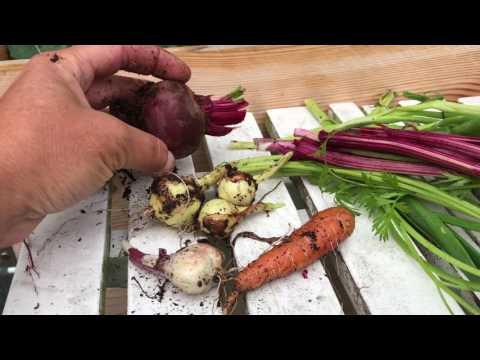 Självhushåll - 5 växter du kan odla och äta HELA växten