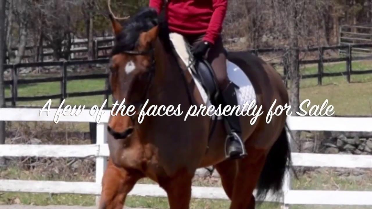 Horse Sale Testimonials — Outfoxed Farm
