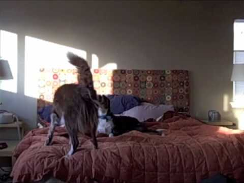 STUPID DOG TRICK #86 (Dog Berry Alarm Clock)