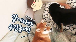 How to Wake Humans Up [Shibainu Gom& Taeng]