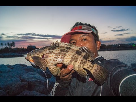Fishing Lures Grouper in Thailand.ตีเหยื่อปลอมชายฝั่ง