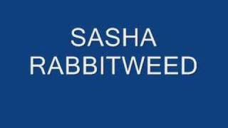 sasha Rabbitweed