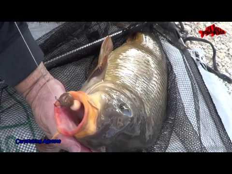 Pescar Carpas