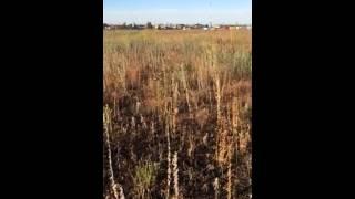 Чесапик поле