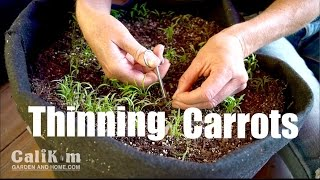 Carrot Growing TIp: Thinning Container Seedlings for Better Harvest //Growing Your Fall Garden EXTRA