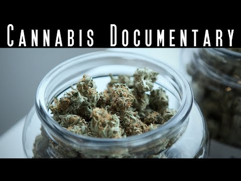 The King of Cannabis - Best Marijuana Documentary - Cannabis Evolution Documentary
