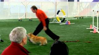 CPE Agility Colors Level 2 Merit
