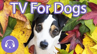 Dog TV: 5 Hours of Entertaining TV For Dogs to Watch! (2020)