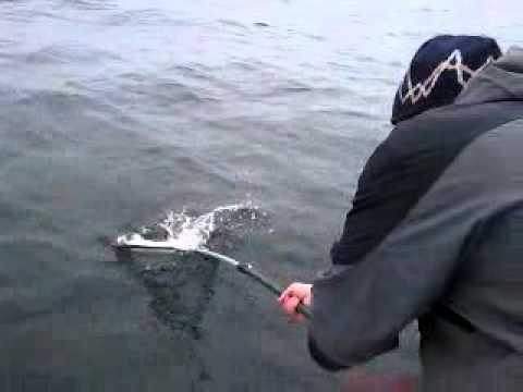 рыбалка ловля катрана