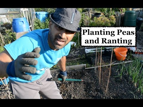 Planting PEAS and RANTING - EP12