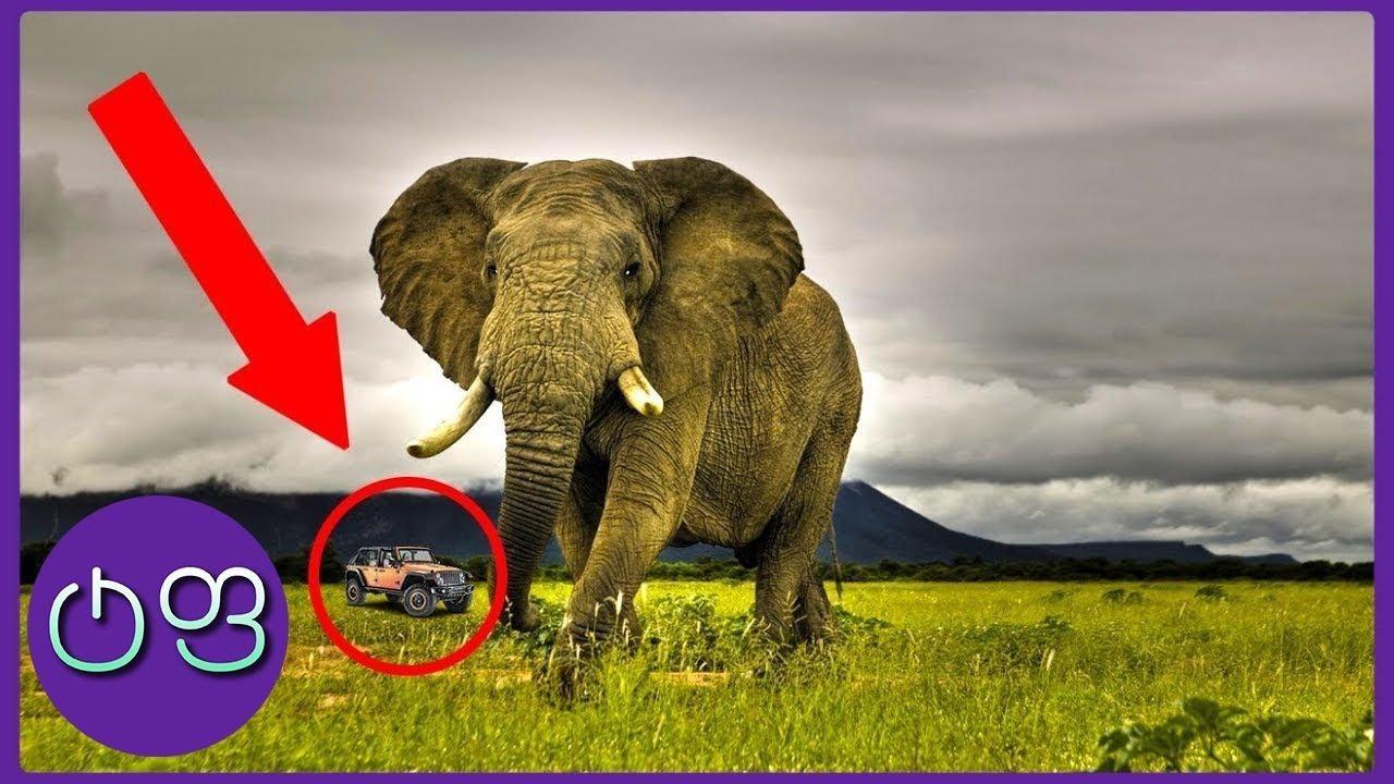 ყველაზე დიდი ცხოველები მსოფლიოში ★ ტოპ ფაქტები ★