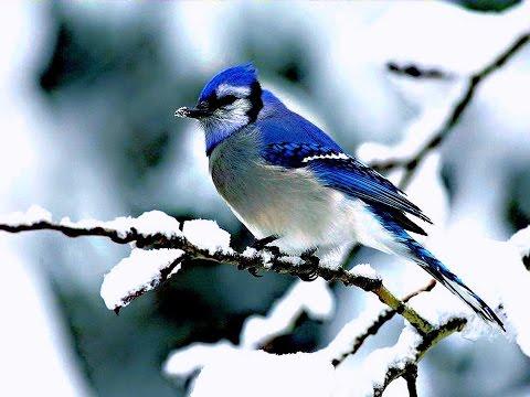 ❤♫ Anne Murray - Snowbird (1969) 雪鳥