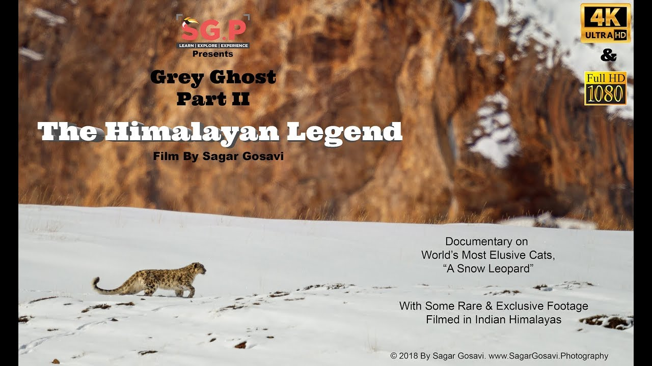 Snow Leopard, The Himalayan Legend.