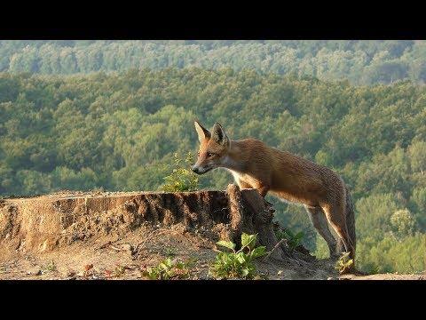 Kelet és nyugat magyar természetfilm