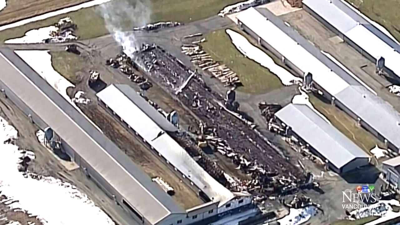 Thousands of chickens killed in Abbotsford barn fire - YouTube