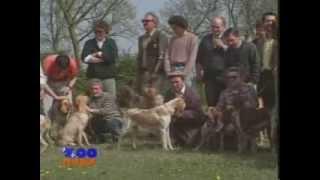 Итальянская легавая - обзорный фильм про породу