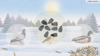 """Видеоурок по биологии """"Как правильно подкармливать птиц"""""""