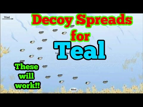 Duck Hunting- Decoy Spreads For Teal