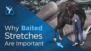 Baited stretches - why are they important