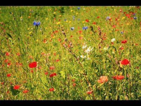 Как сделать траву зеленее в Фотошопе
