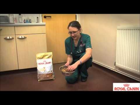 Royal Canin Labrador Retriever Dog Food  Review