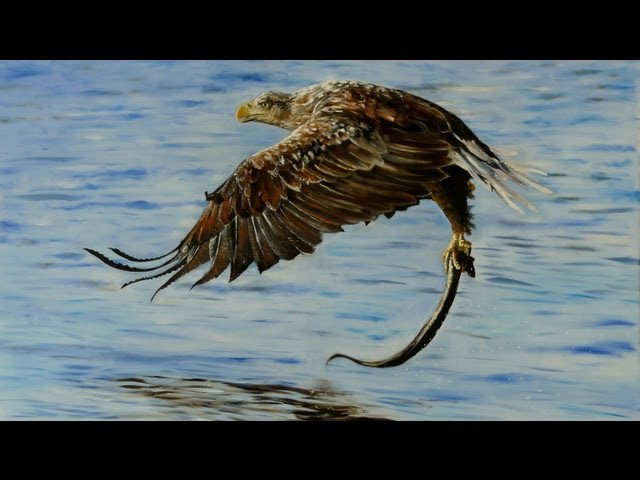 How to paint an Eagle