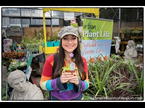 My AMAZING visit to Urban Plant Life Garden Centre, A Gardener's Oasis in  Dublin City