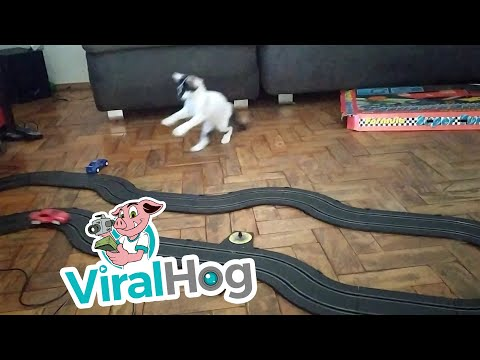 Slot Car Drives Cat Silly || ViralHog