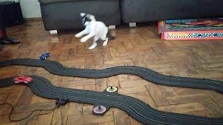 slot-car-drives-cat-silly-viralhog