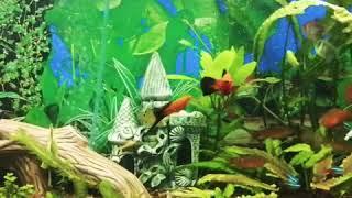 Разновидность аквариумных рыб!