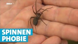 Spinnen im Haus