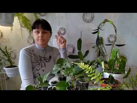 Перевалка, пересадка разных комнатных растений
