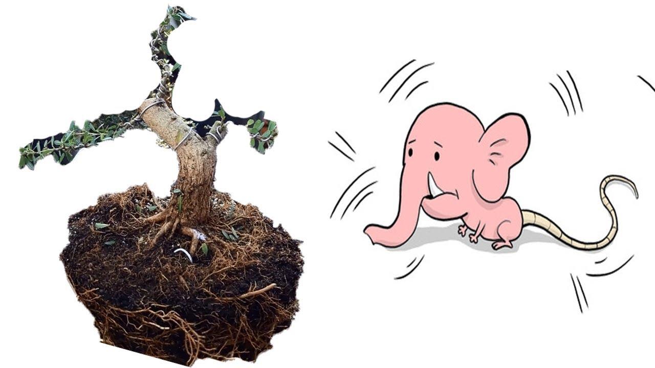 Kỹ thuật cắt giật cây tạo dáng đầu voi đuôi chuột